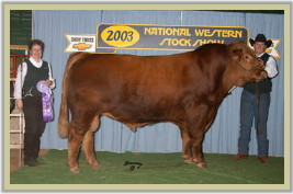 DVE Davidson Famous 58K - Senior Champion Bull at the 2003 National Western Stock Show in Denver, Colorado.