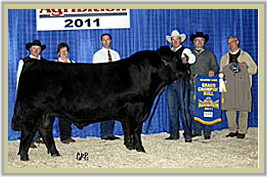 DVE Davidson Jumpstart 44X - Reserve Junior Champion Bull at the 2012 National Western Stock Show in Denver.