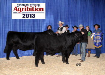 Homozygous Black and Homozygous Polled, Huba Huba 32A is a Jan. 28th 2013 edition of the Navaho sired progeny.