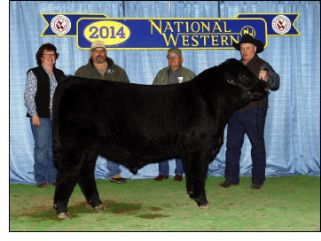 Huba Huba 32A was the Runner Up at the 2014 Bull Futurity in Denver.