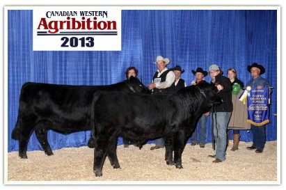 DVE Davidson MS Mambo 32Y and DVE Davidson Huba Huba 32A at Agribition 2013.