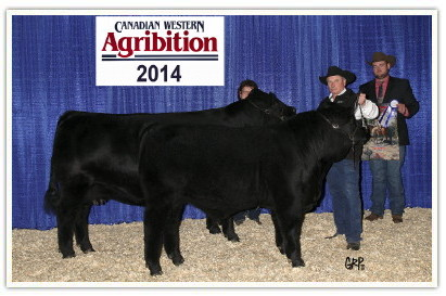 DVE Davidson MS Mambo 32Y and DVE Davidson Chester 72B at Agribition 2014.
