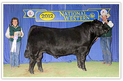 Reserve Junior Champion Bull at the 2012 National Western in Denver.