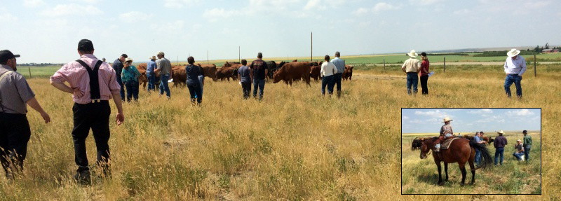 A good crowd joined us at the 2017 Pasture Tour.